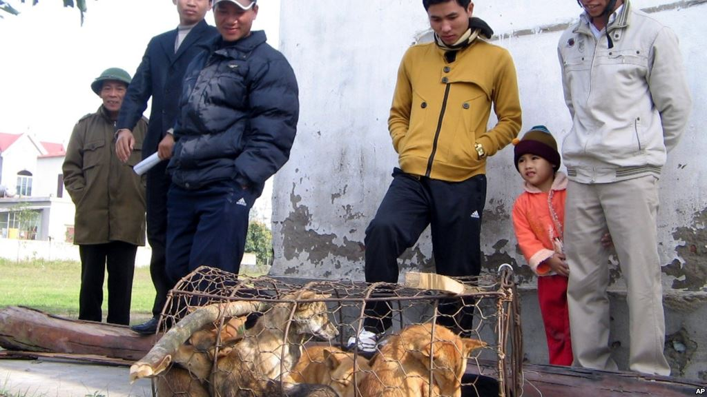 Nạn trộm chó ở Việt Nam lên truyền hình Anh Quốc