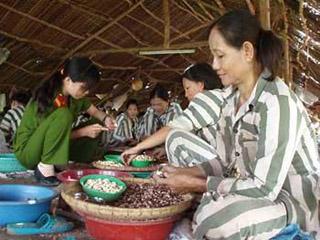 Lao Động Việt tường trình về lao động cưỡng bức trong nhà tù Việt Nam