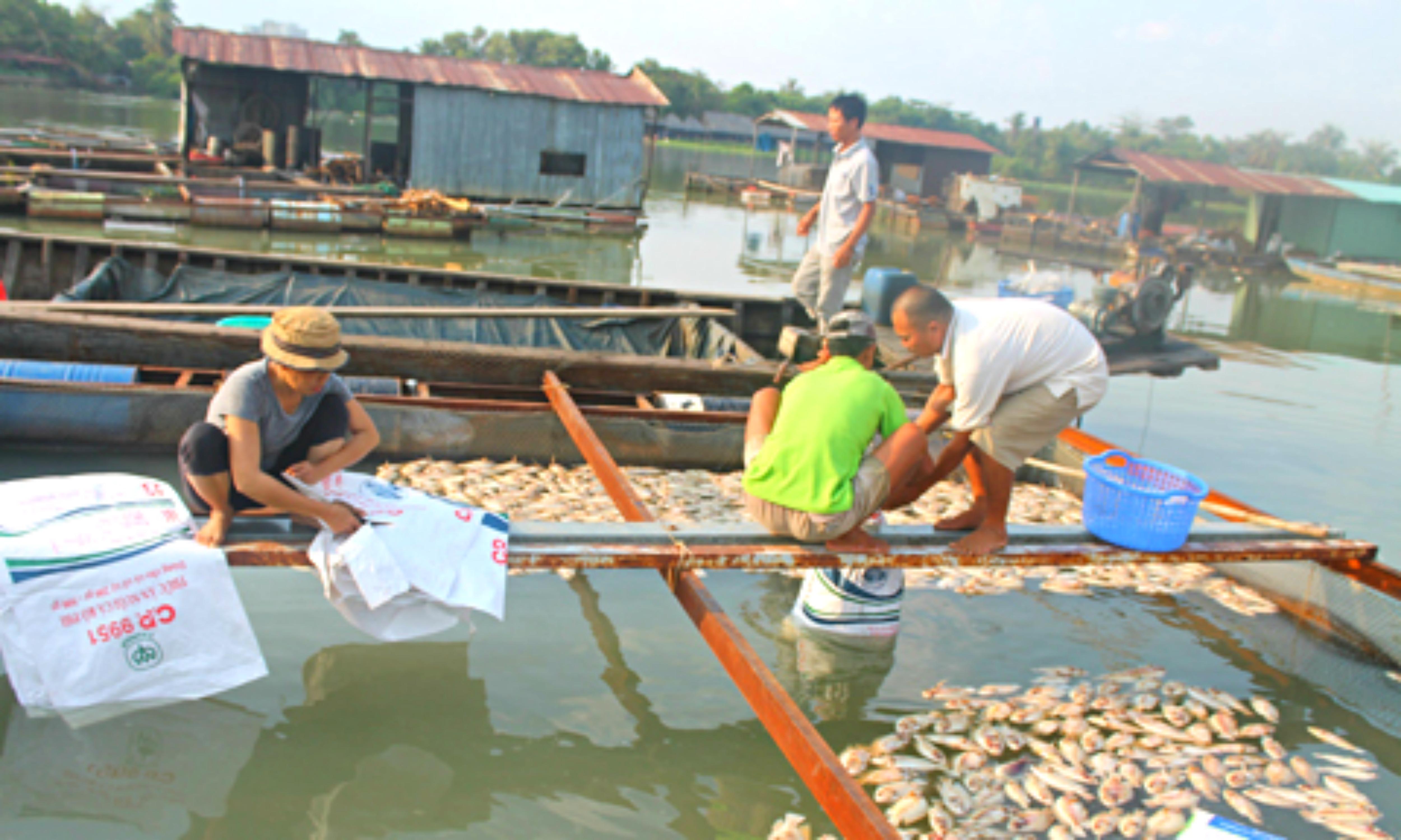 Nguyên nhân cá chết hàng loạt ở Đồng Nai vẫn chưa xác định