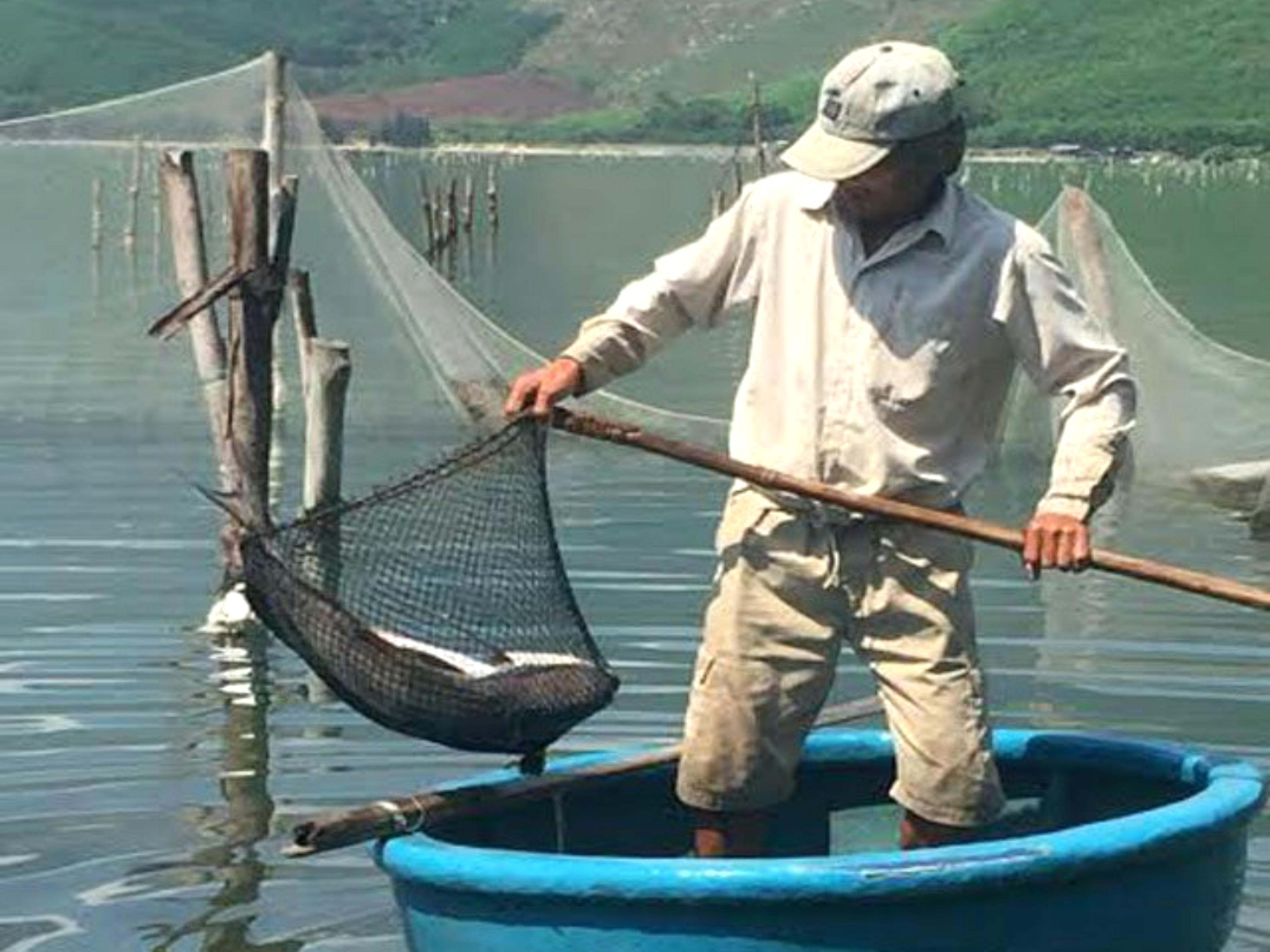 Cá nuôi tại Lăng Cô tiếp tục chết