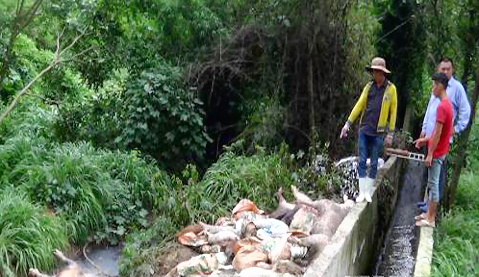 Công ty của Đài Loan quăng xác heo ở thượng nguồn sông Sài Gòn