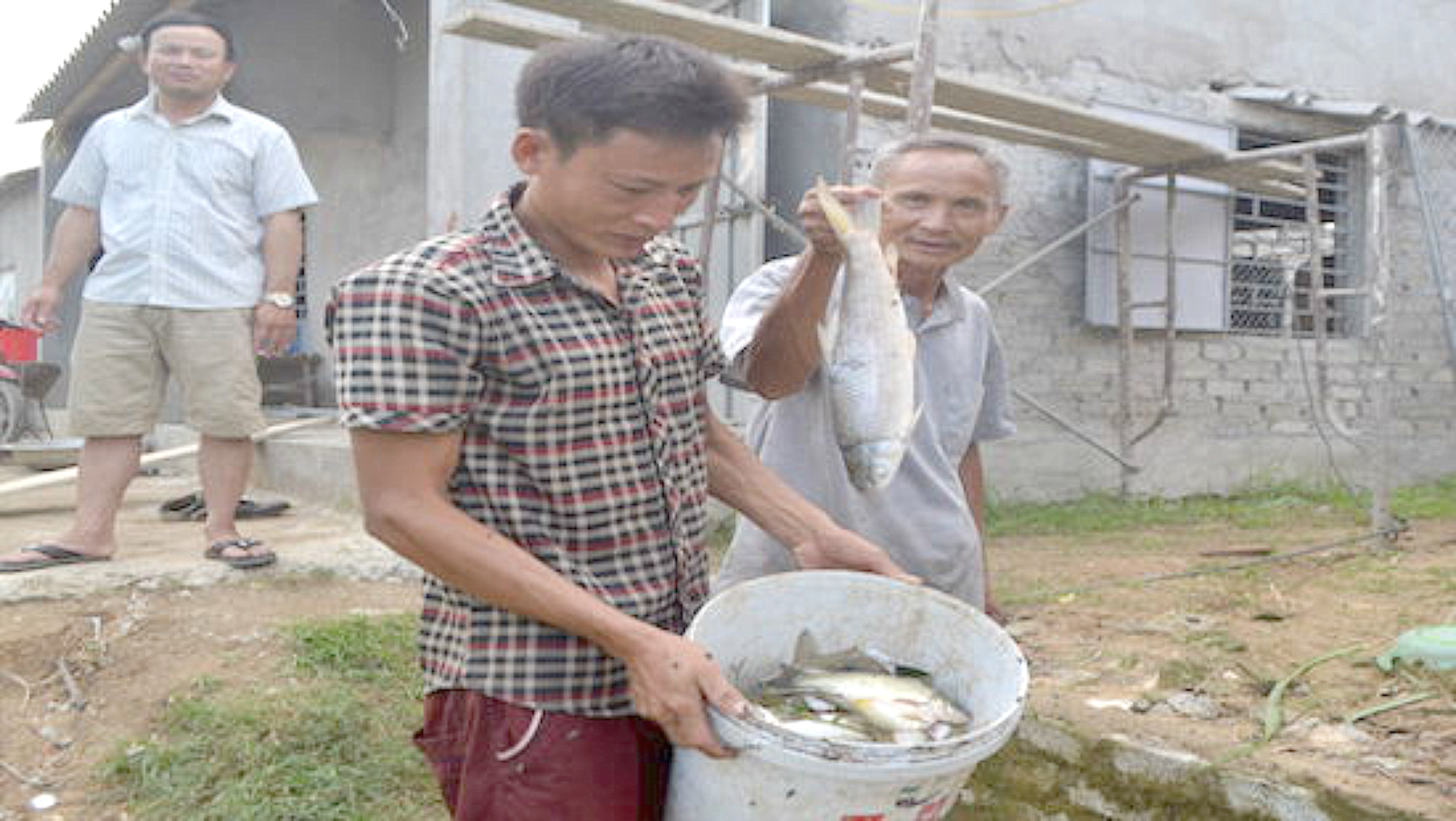 Cá lại chết hàng loạt ở Nghệ An, hàng trăm hộ dân điêu đứng
