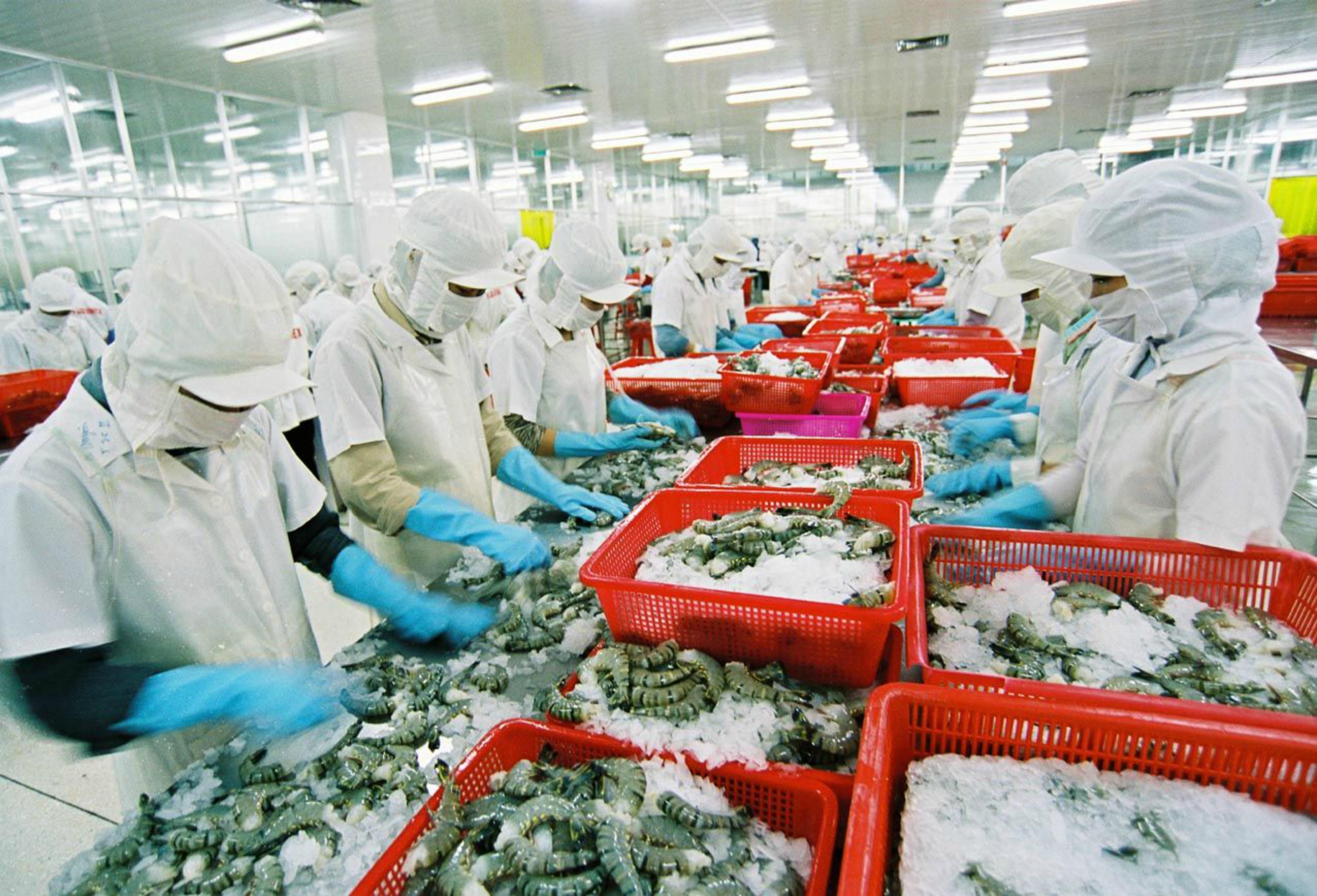 Trên 8,000 tấn thủy sản xuất cảng bị trả về
