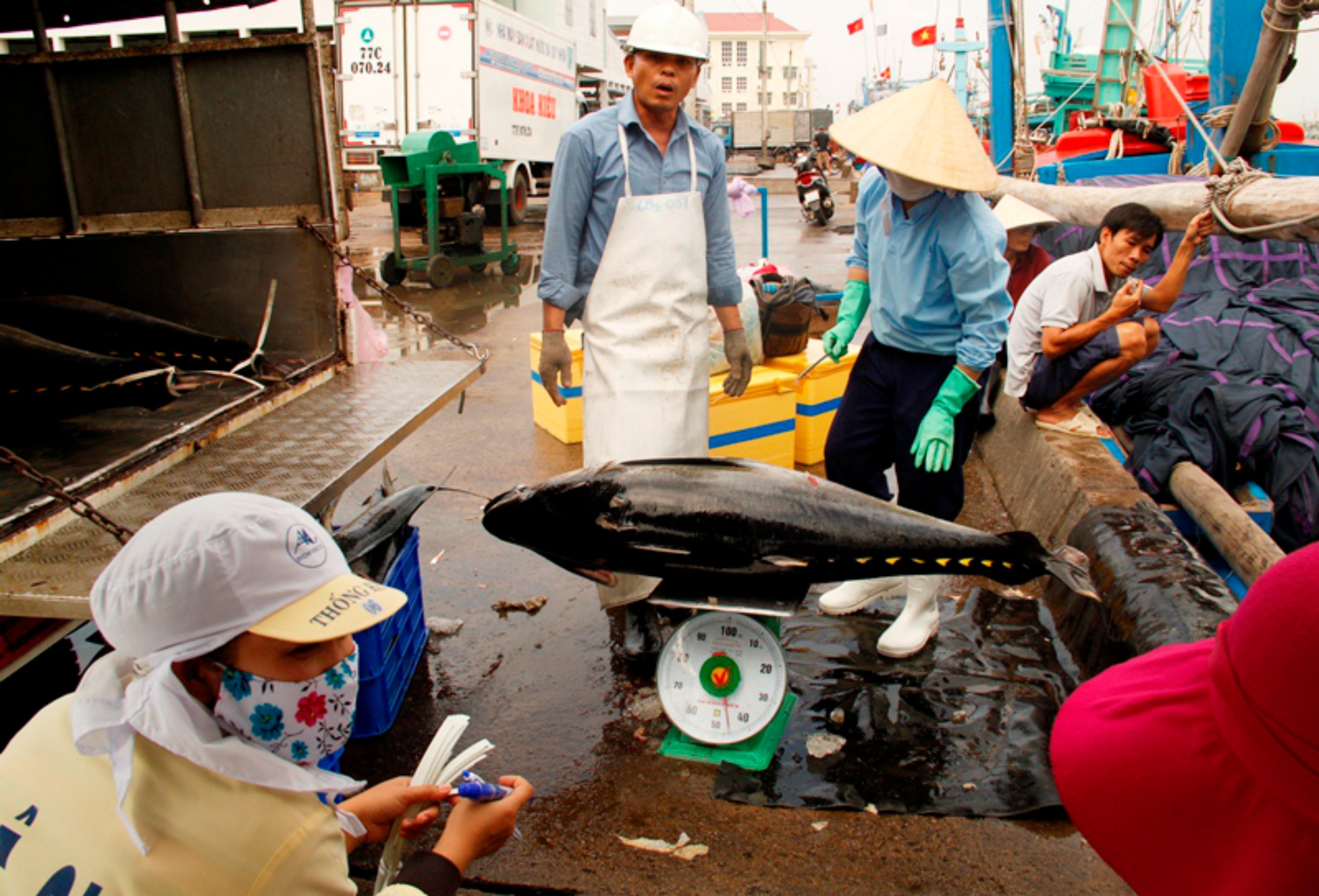 Không ăn được Tết, ngư dân Phú Yên còn bị thương buôn ép giá