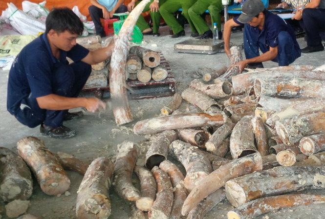 Việt Nam là nơi trung chuyển và tiêu thụ đường dây buôn lậu ngà voi