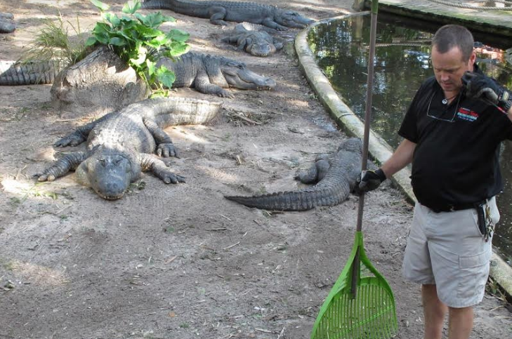 Florida: Cá sấu xổng chuồng sau con bão