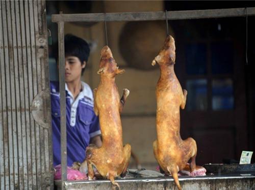 Người Việt ăn thịt 5 triệu con chó một năm, nhiều thứ hai trên thế giới
