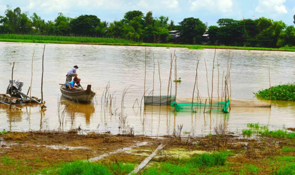 Không còn mùa nước nổi cho người nông dân Việt