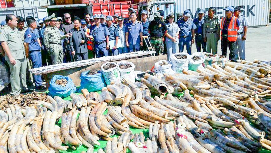 Giám đốc công ty Việt Nam bị truy nã về tội vận chuyển ngà voi, vảy tê tê đến Cambodia