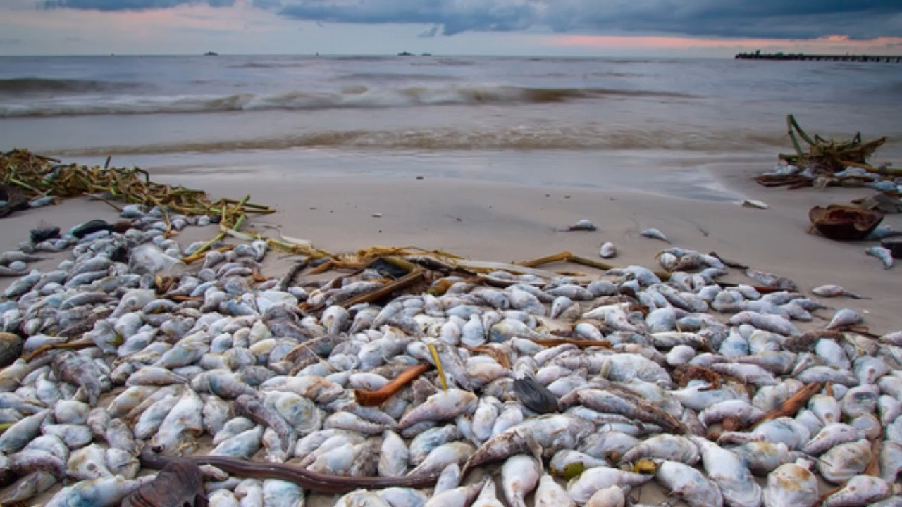Biển Miền Trung cần 10 năm để phục hồi