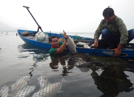 Cá lại chết hàng loạt tại đầm Lập An – Huế