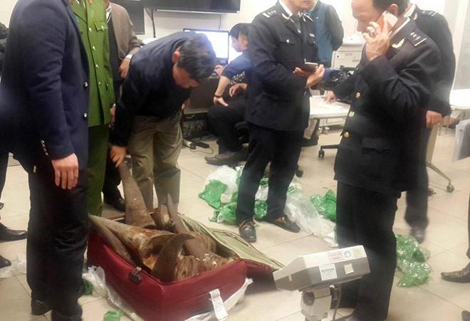 Hơn 50kg sừng tê giác bị bắt giữ tại phi trường Nội Bài