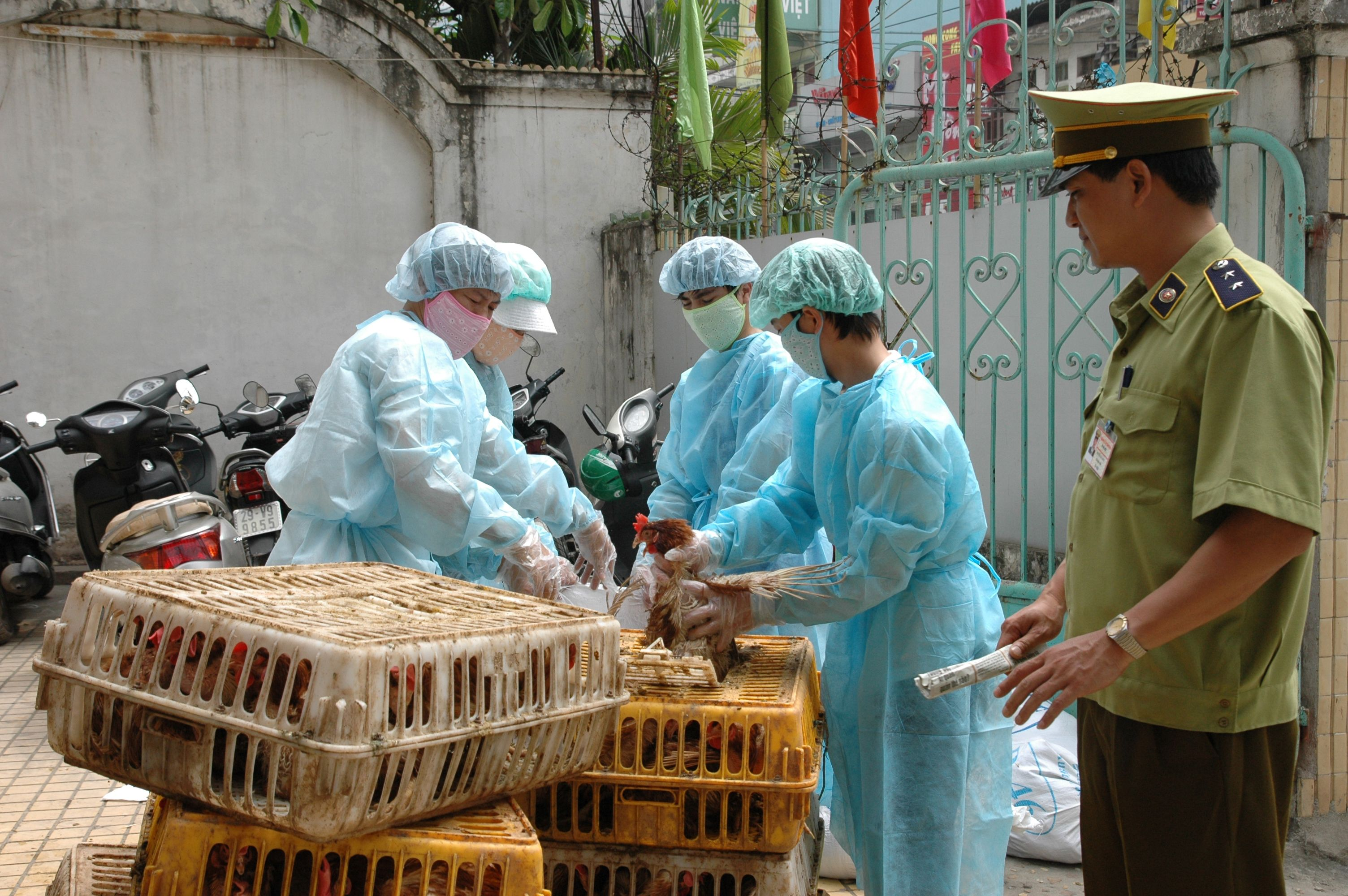 Việt Nam cảnh báo nguy cơ bùng phát dịch cúm gia cầm