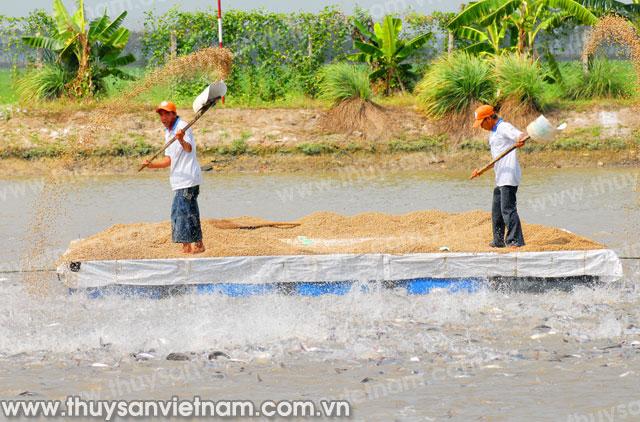 Tin xấu về phương pháp nuôi khiến ngành xuất cảng cá tra của Việt Nam bị tổn thất
