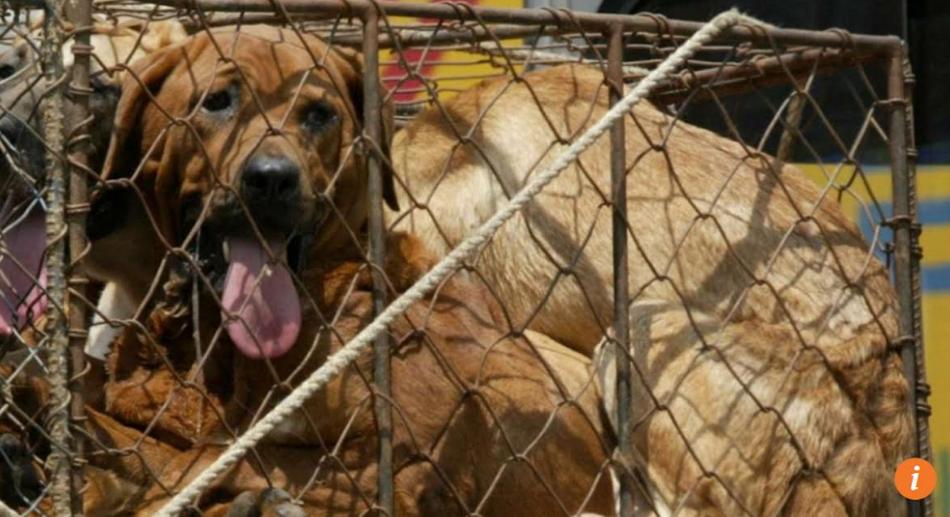 Nam Hàn đóng cửa chợ thịt chó lớn nhất nước, trước kỳ Thế Vận Hội Mùa Đông 2018