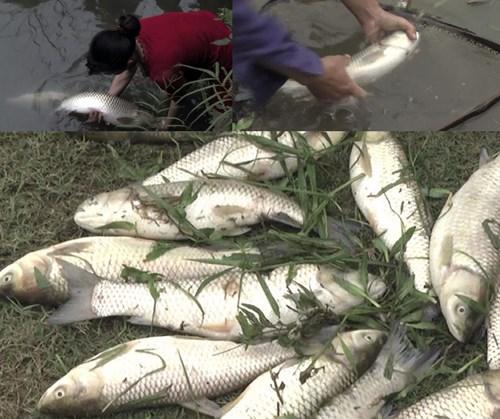 Người dân khốn đốn sau vụ vỡ đập chứa chất thải ở Nghệ An