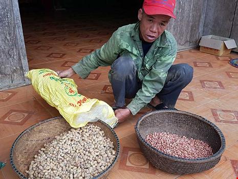 Chính quyền phát đậu giống phẩm chất kém cho dân nghèo