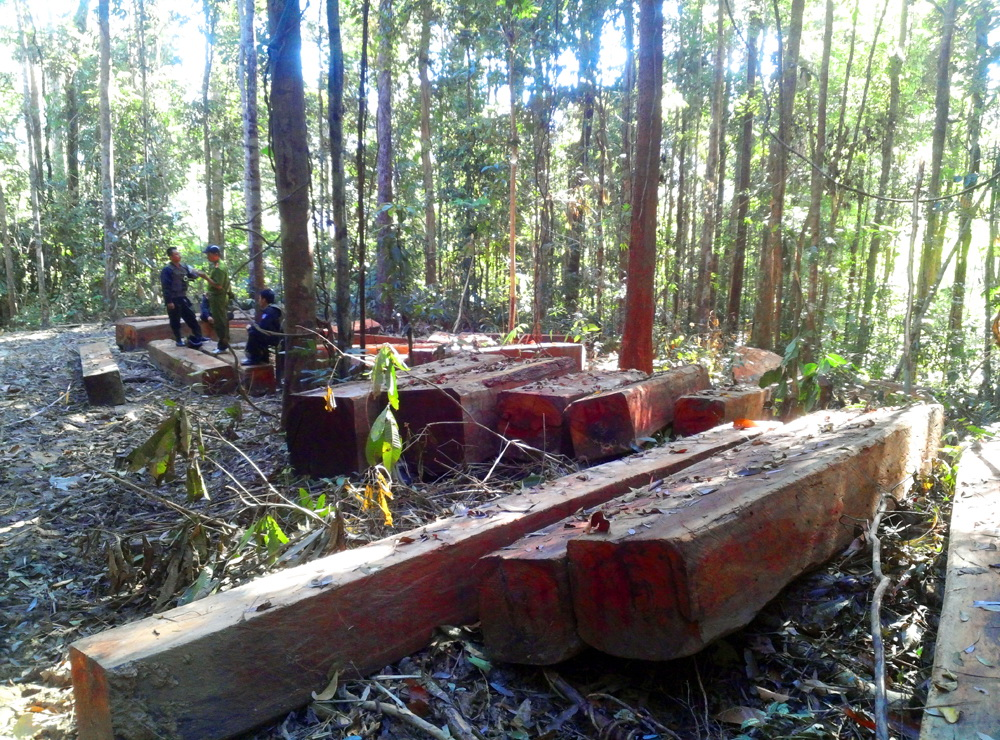 90% gỗ Tây Nguyên bán cho Trung Cộng