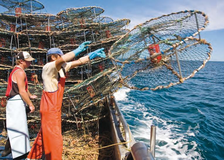 Úc cấm nhập cảng tôm sú gây thiệt hại nặng cho Việt Nam