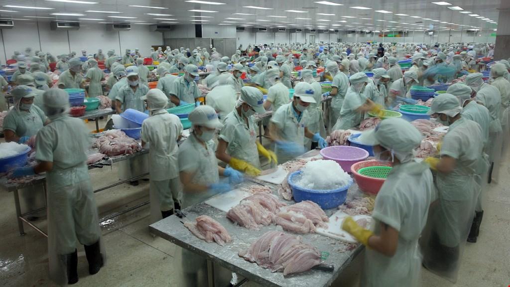 Trung Cộng cảnh giác về cá tra Việt Nam