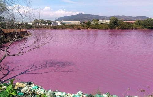 Nước hồ điều tiết lũ đổi sang màu tím 3 tuần, nhà chức trách vẫn chưa biết