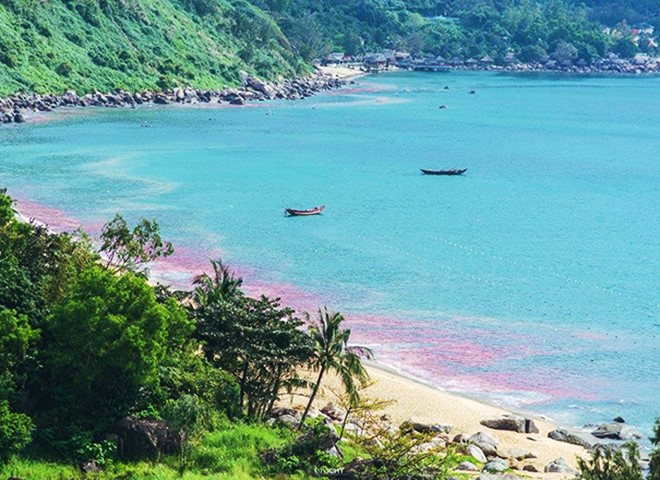 Chính quyền tại các tỉnh miền Trung lúng túng trước sự xuất hiện của dải nước đỏ
