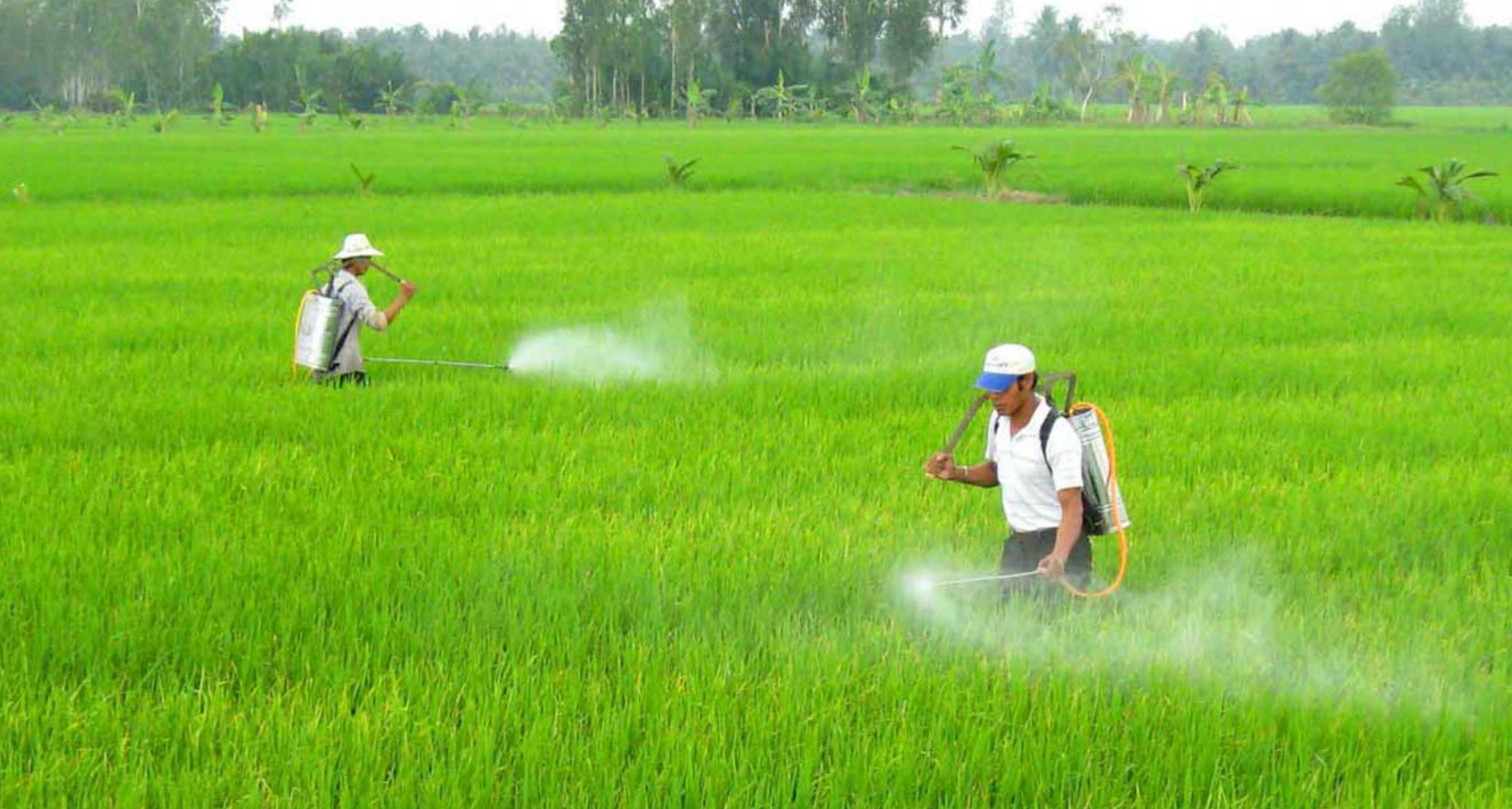 Việt Nam chi nửa tỷ Mỹ kim mỗi năm để nhập cảng thuốc trừ sâu từ Trung Cộng