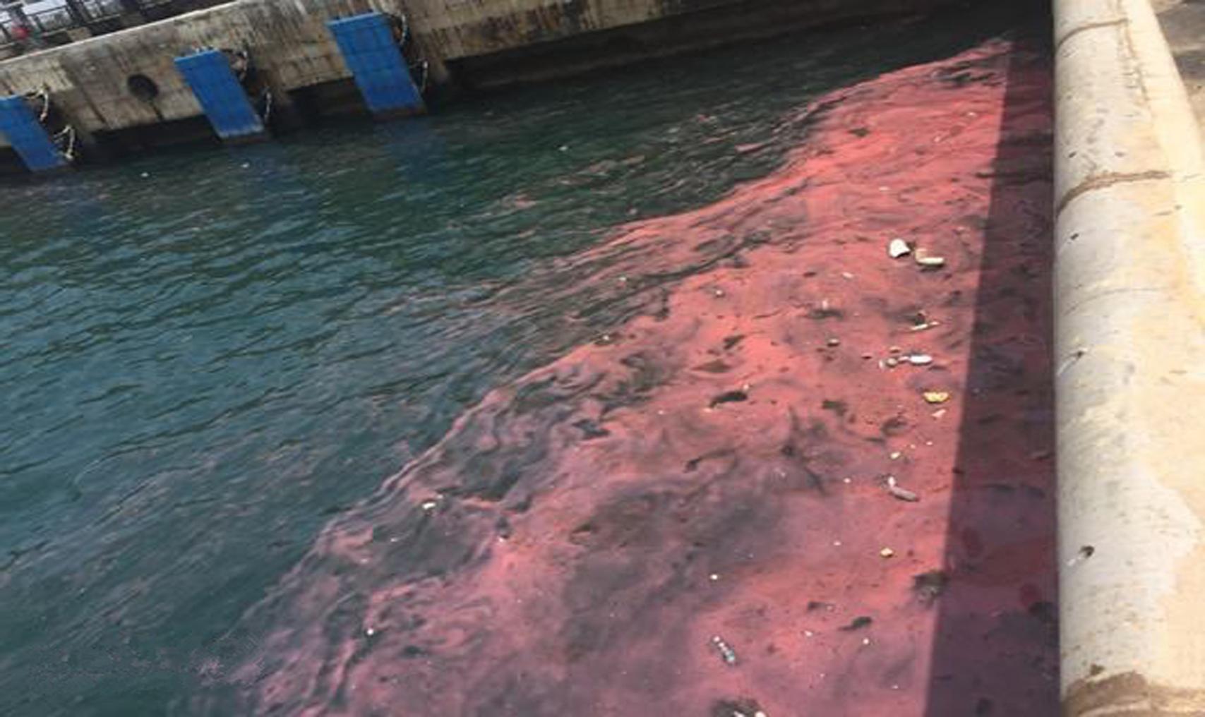Lại xuất hiện dải nước đỏ tại cảng Sơn Dương