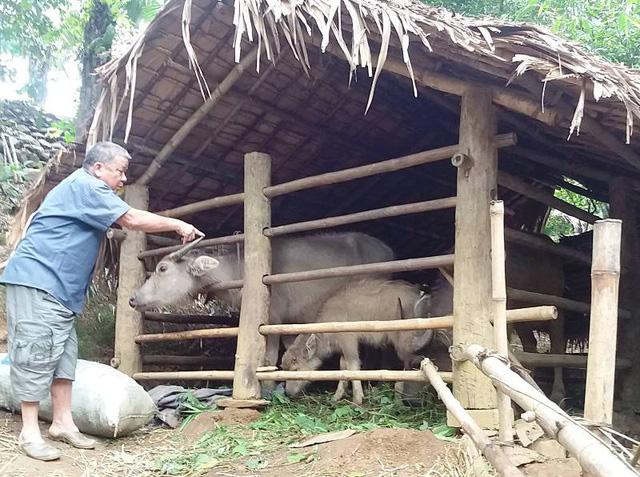 Nông dân Thanh Hóa bàng hoàng vì trâu chăn thả bị chém