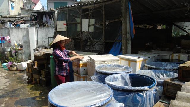 Chính quyền đùn đẩy trách nhiệm, ngư dân sống nhờ sứa biển tiếp tục khổ sở