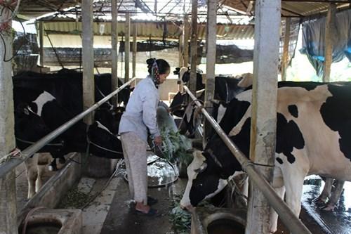 Nông dân Vĩnh Phúc bất mãn việc thu hồi đất nuôi bò làm khu du lịch sinh thái