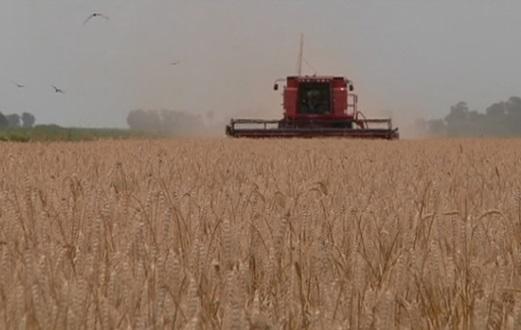 Mexico có thể mua 50,000 tấn lúa mì của Argentina thay vì của Hoa Kỳ trong tuần này