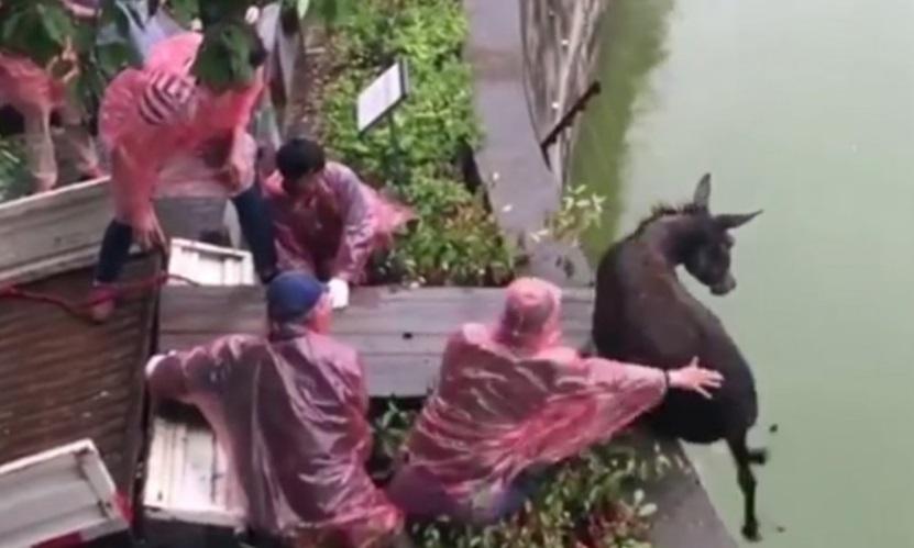 Du khách kinh hoàng cảnh sở thú Trung Cộng ném lừa sống cho cọp ăn