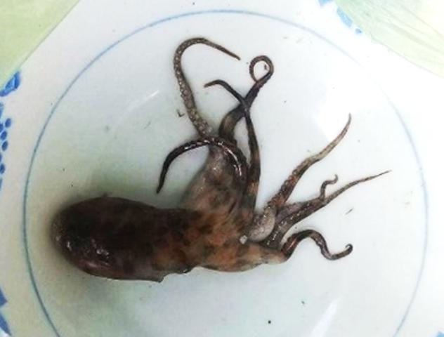 Một phụ nữ bị bạch tuộc cắn chết ở Thừa Thiên-Huế