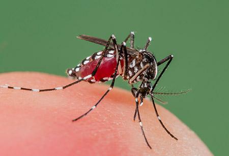 Khuyến cáo du khách Hoa Kỳ đến Việt Nam về dịch sốt xuất huyết