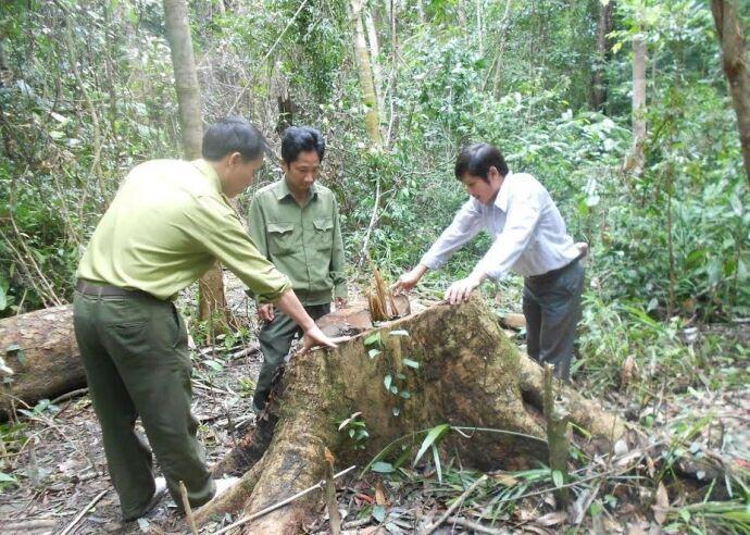 Hơn 40 Hecta rừng ở Bình Định bị đốn mà nhà cầm quyền không biết