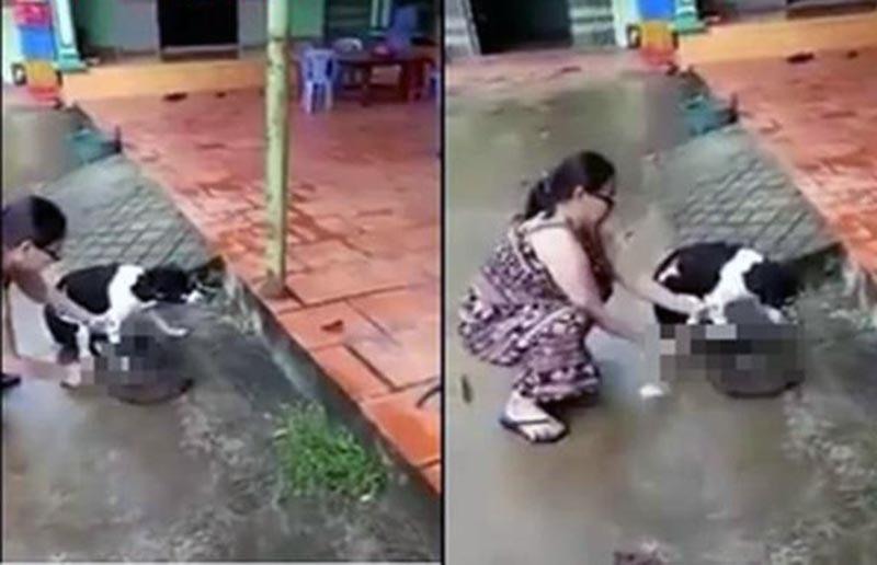 Bà chủ chặt chân chó để ngăn chó bị hàng xóm đánh chết