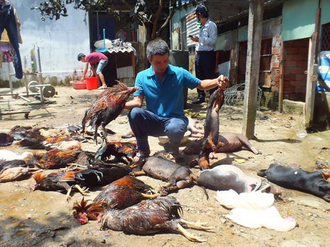 Vỡ ống dẫn khí amoniac ở Sài Gòn – 4 người nhập viện, chó gà chết la liệt