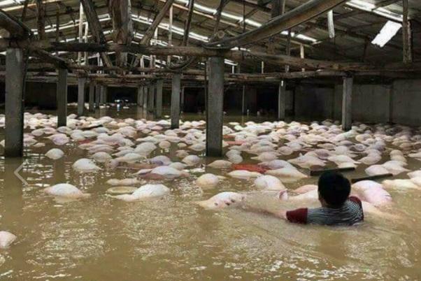 Ít nhất 54 người chết vì lũ lụt và lở đất ở Việt Nam
