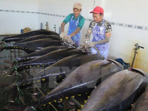 FDA ngăn chặn hải sản của công ty Việt Nam vì cá ngừ nhiễm siêu vi trùng viêm gan A