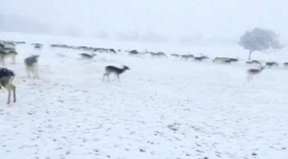 Tuyết rơi bất ngờ ở các tiểu bang miền Nam