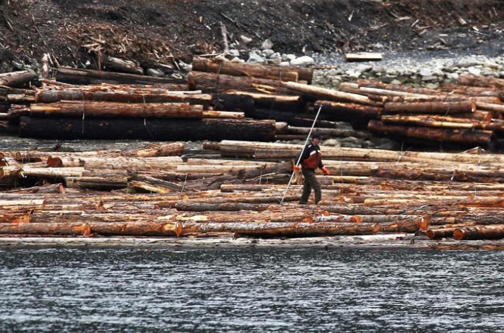 Canada chỉ trích Hoa Kỳ đánh thuế gỗ nhập cảng