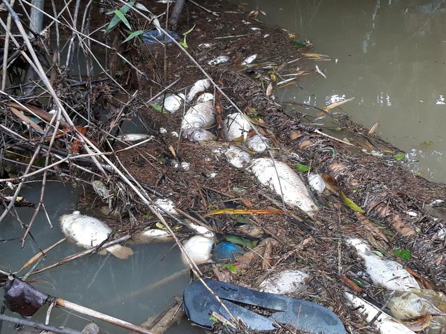Cá chết hàng loạt tại Quảng Ngãi, vịt ăn cá cũng chết theo