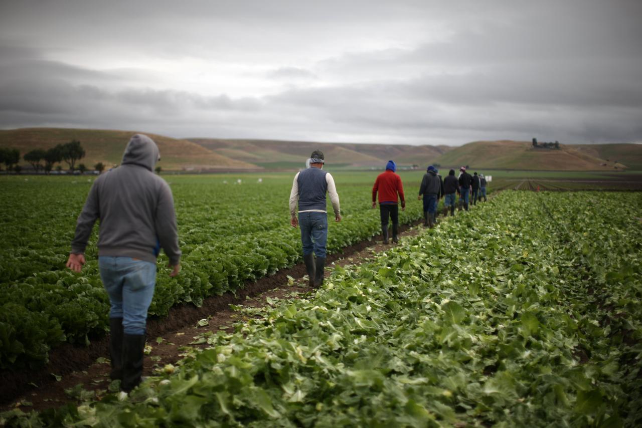 Hủy bỏ NAFTA sẽ ảnh hưởng xấu đến giới nông dân Hoa Kỳ