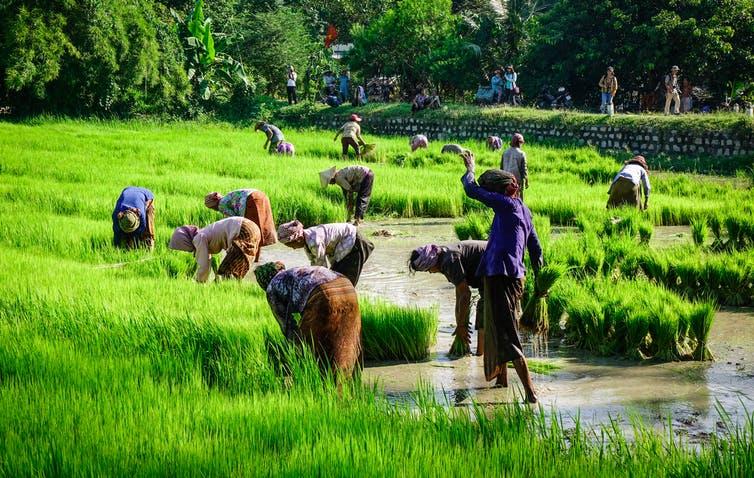 Biến đổi khí hậu đang gây khủng hoảng di cư ở Nam Việt Nam