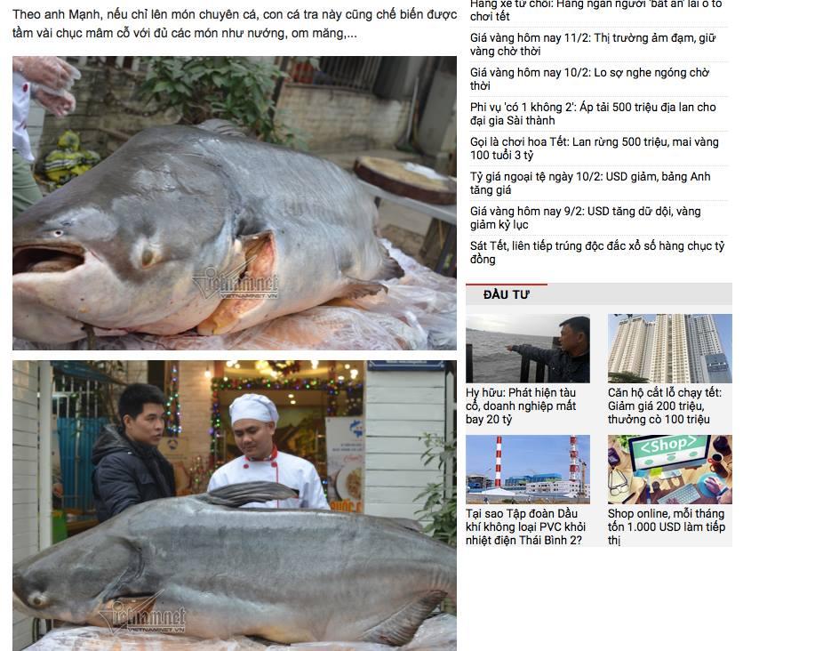 Vietnamnet bị chỉ trích vì đưa tin xẻ thịt cá thuộc loài vô cùng quí hiếm