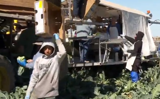 Bức tường biên giới ngăn cách cộng đồng ở Calexico – California