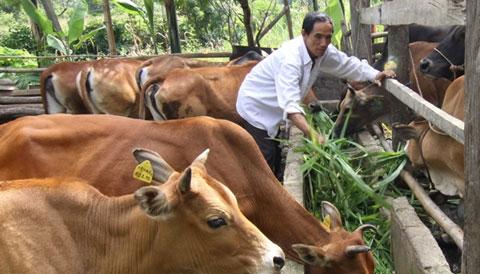 Thịt bò Úc và Mỹ tràn ngập gây khó cho ngành chăn nuôi Việt Nam