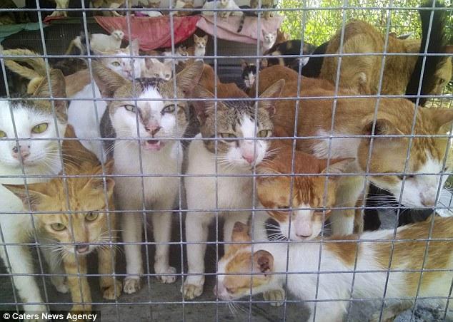 Chợ thịt mèo ở quận Bình Tân, Sài Gòn lên báo quốc tế
