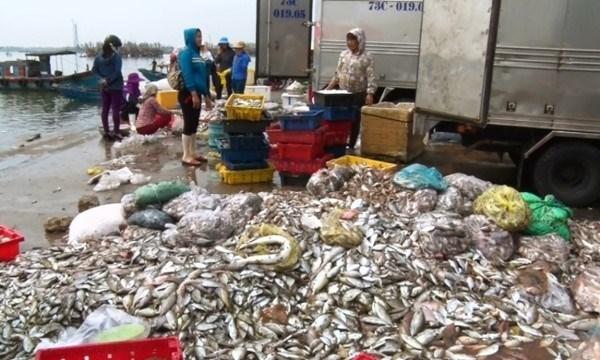 Ngư dân chịu thảm họa Formosa đang bị ngân hàng thúc ép đòi nợ